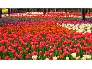 【新加坡】花卉公司招采购员